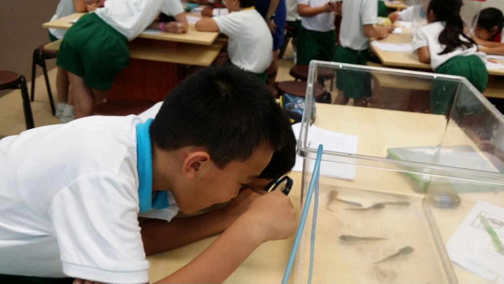 Student observing tadpole
